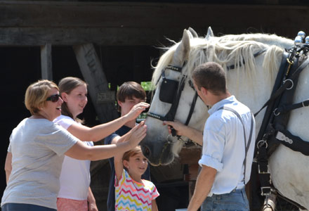 Holding a Draft Horse