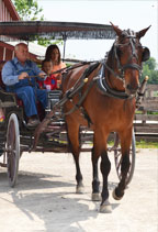 historic-village-buggy-ride