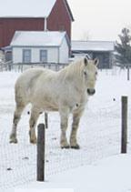 Horse-in-Winter-Scene-Sauder-Village